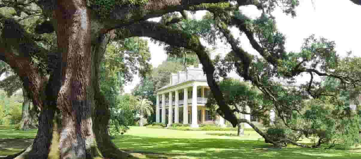 Houmas House plantation and their amazing Live Oak tree